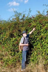 Mark - blackberrying