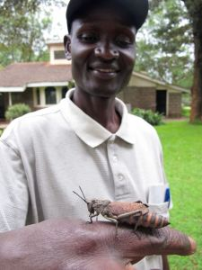 Joseph and a locust!